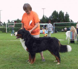 Dogwoods Especial Spikit Berner Sennenhund Uppf. Ingrid Wegner, Björketorp Ägare. Gerty Böe, Västerlanda